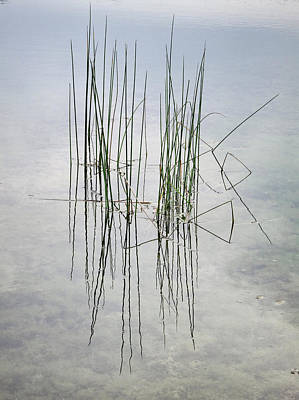 Reeds In A Shallow Lake Poster