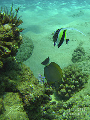 Poster featuring the photograph Reef Life by Suzette Kallen