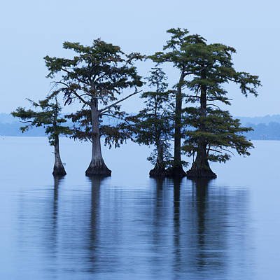 Reelfoot Lake Poster by Eric Foltz