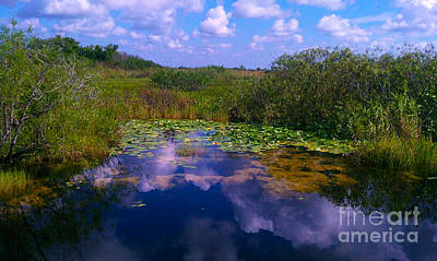 Reflecting In The Glades Poster