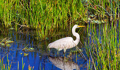 Reflection Of White Crane In Pond Poster by Panoramic Images