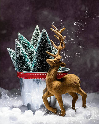 Reindeer At Christmas Poster