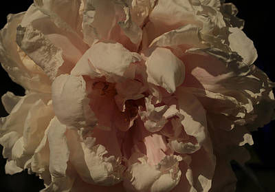 Rembrandt's Peony Poster
