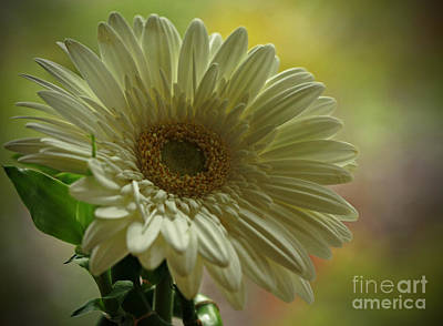 Remember Me Poster by Inspired Nature Photography Fine Art Photography
