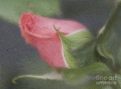 Rendition Of A Rose Poster by Deborah Benoit