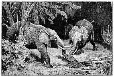 Rescue By African Elephants Poster