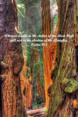 Rest In The Shadow Of The Almighty - Psalm 91.1 - From Sunlight Beams Into The Grove At Muir Woods Poster by Michael Mazaika