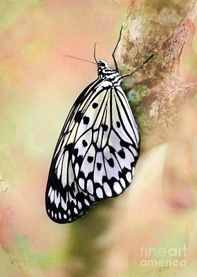 Restful Butterfly Poster