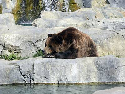 Resting Bear Poster by Teresa Schomig
