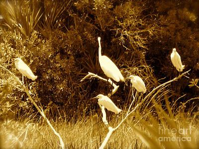Resting Flock Sepia Poster by Anita Lewis