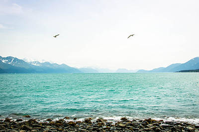 Resurrection Bay With Sea Gulls Poster