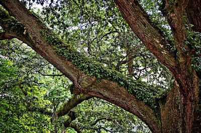 Poster featuring the photograph Resurrection Fern by Linda Brown
