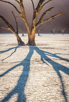 Return Of The Shadow Of The Camel Thorn - Dead Vlei Photograph Poster
