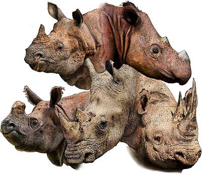 Rhino Collage Poster by Roger Hall