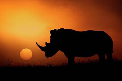 Rhino Sunrise Poster by Mario Moreno