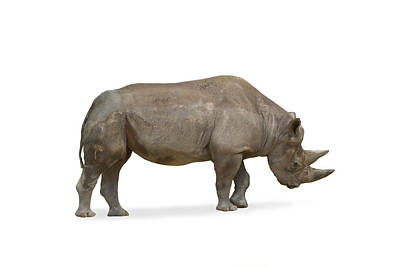Poster featuring the photograph Rhinoceros by Charles Beeler