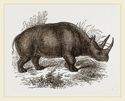 Rhinoceros Keitloa Poster by Litz Collection