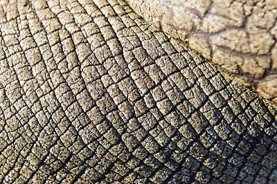 Rhinoceros Skin Poster by Peter Chadwick