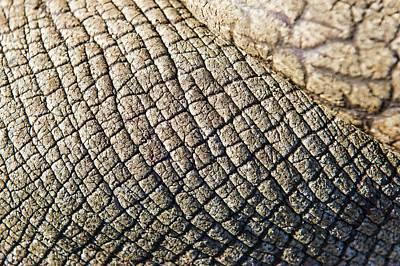 Rhinoceros Skin Poster