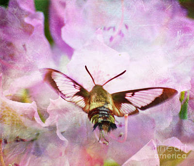 Rhododendron Dreams Poster by Kerri Farley