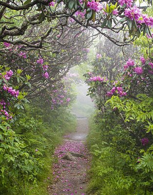 Rhododendron Time In North Carolina Poster