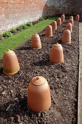 Rhubarb Cloches Poster
