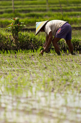 Poster featuring the photograph Rice Farmer - Bali by Matthew Onheiber