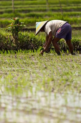 Rice Farmer - Bali Poster