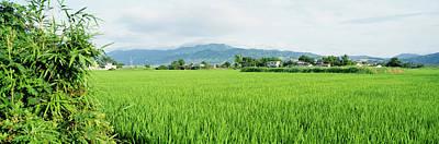 Rice Field At Sunrise, Kyushu, Japan Poster