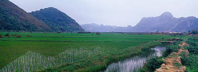 Rice Paddies In A Fiele, Vietnam Poster by Panoramic Images