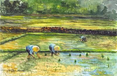 The Rice Paddy Field Poster by Carol Wisniewski