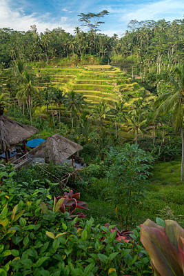 Poster featuring the photograph Rice Terraces - Bali by Matthew Onheiber