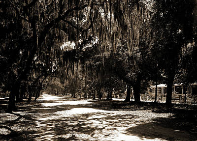 Ridgewood Ave, Daytona, Fla, Roads, Spanish Moss Poster by Litz Collection