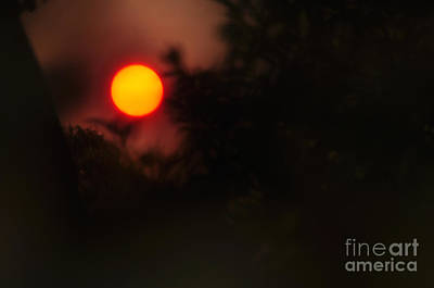 Ring Of Fire - Eerie Bushfire Sunset Poster by Kaye Menner