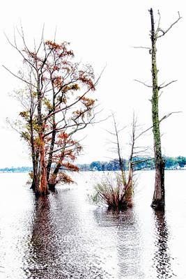River Trees - Elizabeth City Nc Poster by Dan Carmichael