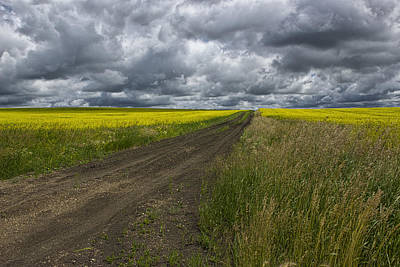 Road Going Through A Canola Field In Southern Alberta Poster by Randall Nyhof