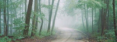 Road Passing Through A Forest, Skyline Poster by Panoramic Images