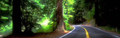 Road, Redwoods, Mendocino County Poster by Panoramic Images