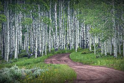 Road Through A Birch Tree Grove Poster