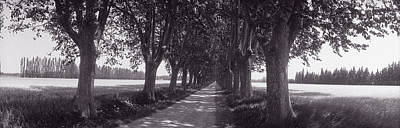 Road Through Trees, Provence, France Poster by Panoramic Images