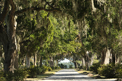 Poster featuring the photograph Road With Live Oaks by Bradford Martin