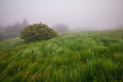 Roan Mountain Appalachian Trail Landscape Photography Windswept Poster