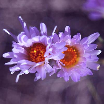Robert Melvin - Fine Art Photography - Purple Morning Poster