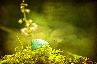 Poster featuring the photograph Robin's Egg On Moss by Peggy Collins