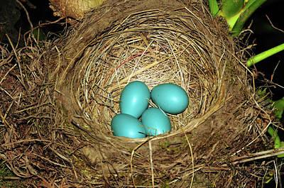 Robin's Eggs, Backyard, Portland Poster by Michel Hersen
