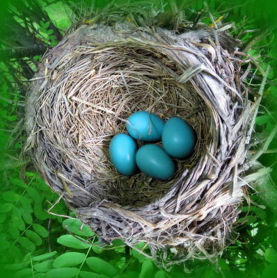 Robin's Eggs Poster by Ramona Johnston
