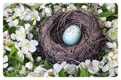 Robin's Nest Poster by Edward Fielding
