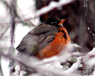 Poster featuring the photograph Robins' Patience by Lesa Fine
