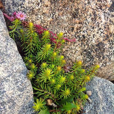 Poster featuring the photograph Rock Flower by Meghan at FireBonnet Art