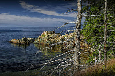 Rock Formations And Trees On The Shoreline In Acadia National Park Poster by Randall Nyhof